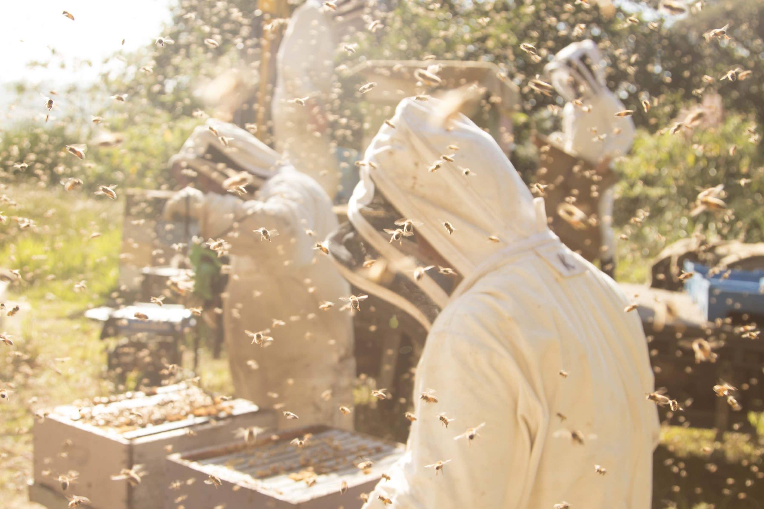 7 معلومات حول عسل المانوكا كُل مقالة!